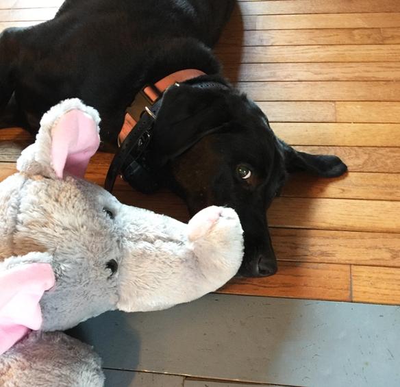 Izzy and her elephant